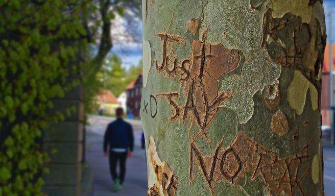tree-trunk-1159013_1920